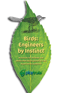 Birds Activity Guide
